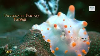 4k Underwater Video Sony RX100 IV Underwater Fantasy Taiwan