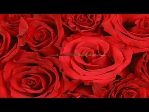Rosa - Marisa Monte