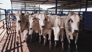 Visita às operações da Ourofino Saúde Animal- Empiricus