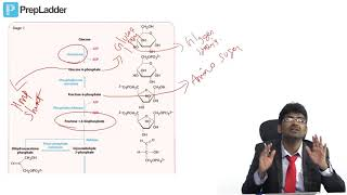 Glycolysis - MCQ discussion