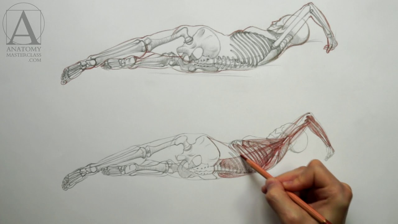 Female Body Anatomy - Anatomy Lesson for Artists - YouTube