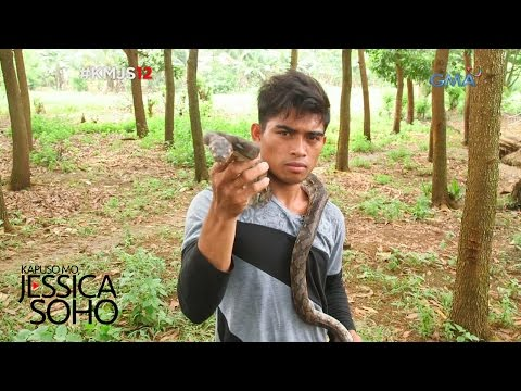 Kapuso Mo, Jessica Soho: King Cobra Hunter ng Compostela Valley