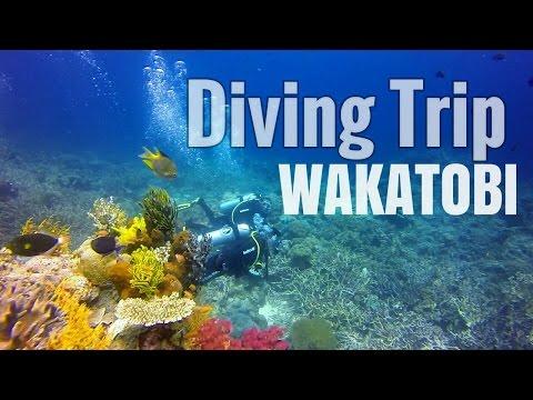 DIVE WAKATOBI - The best site underwater Paradise #TravelmateINDONESIA