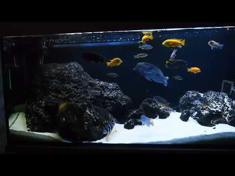 450l malawi lake fish tank olympus e pl6 camera test for Fish tank camera