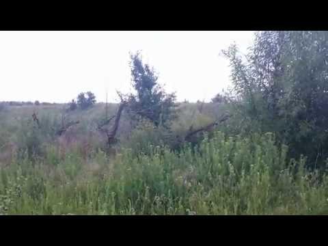 Лето.Природа возле реки Молочки.Мелитополь.