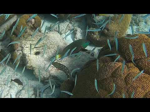 Salzwasser Aquarium (HD)из YouTube · Длительность: 1 мин12 с