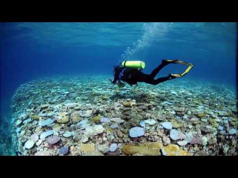 Coral Reefs and Our Current Climate