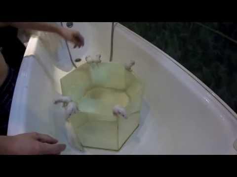 Как плавает крыса видео