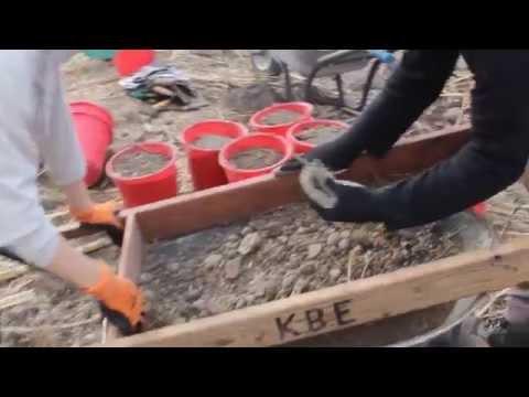 Sifting at Kursi Beach excavation 2015