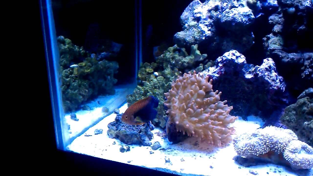 potters angelfish youtube
