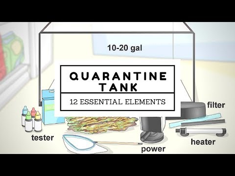 Quarantine Tank: 12 Essential Elements