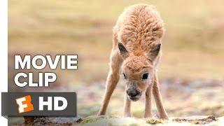 Born in China Movie Clip - Walking is Hard (2017) | Movieclips Coming Soon