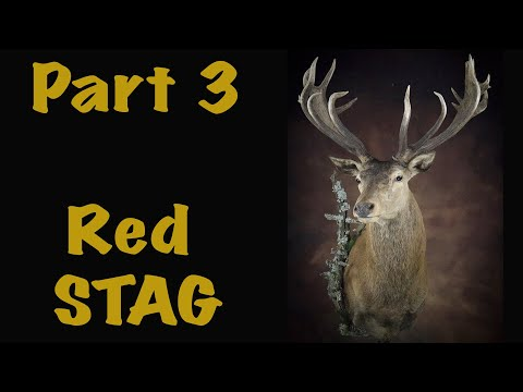 Red Stag Shoulder mount, Facial clay work, Art of Taxidermy.