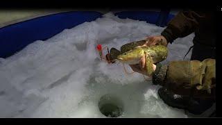 Отличная рыбалка на Енисее Разминка перед боем