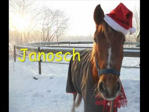 Frohe Weihnachten Pferd.Frohe Weihnachten Wünschen Die Pferde X3