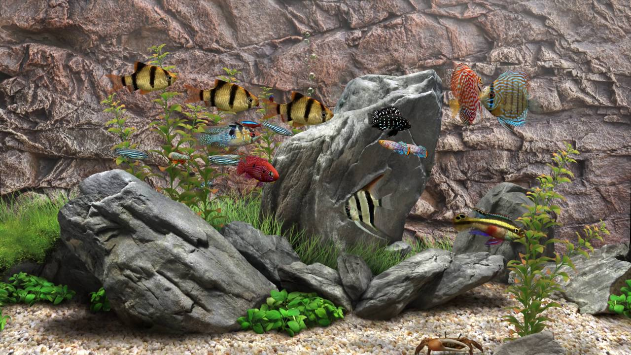 3D Fish Aquarium in 4k [60fps] - DreamScene [Live Wallpaper] - YouTube