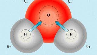 Химический состав клетки. Ф 2. Урок биологии.