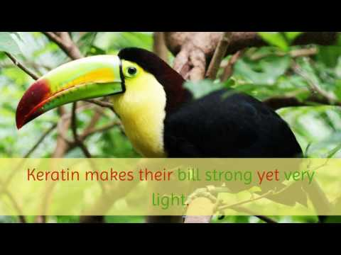 15 Unknown Things You Should Know About Keel Billed Toucan