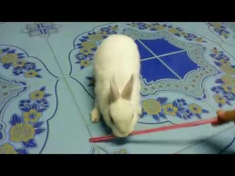 เล่นกับกระต่าย น้องมัฟฟิน