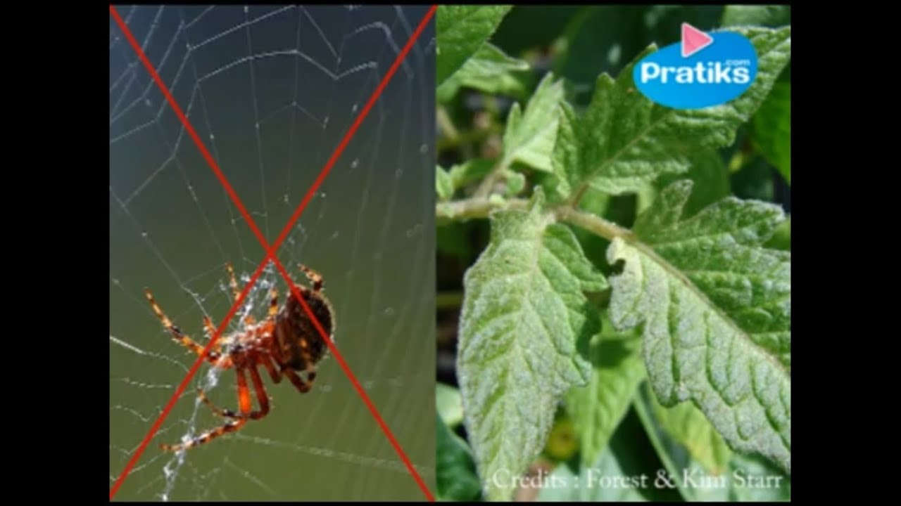Faire Fuir Les Fourmis comment chasser les araignées de façon naturelle