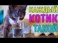 КАЖДЫИ КОТИК ТАКОИ ПАРОДИЯ Magic Pets mp3