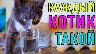 КАЖДЫЙ КОТИК ТАКОЙ | ПАРОДИЯ Magic Pets