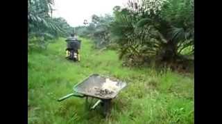 Telor ayam hutan kebun sawit