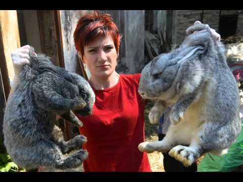 Выращивание кроликов на шкурки.  Изделия из них.