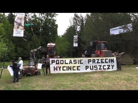 Activists block logging in Poland's ancient forest