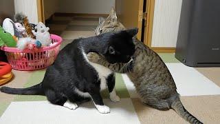 病気の兄を心配して思わず抱きついちゃう妹猫