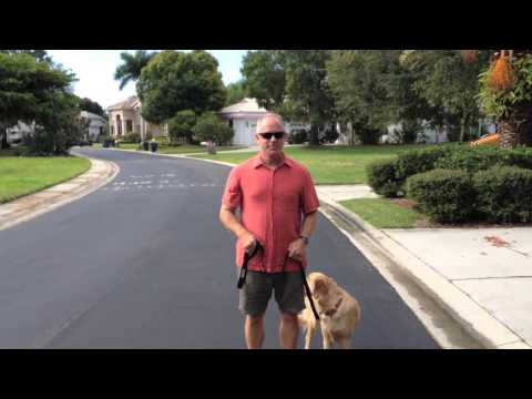 Stop Leash Pulling - Golden Retriever Dog Training