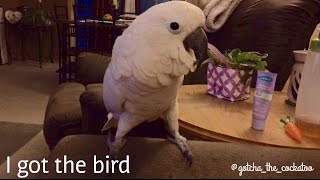 "He's ""got the bird!"" Lol *subtitled*"