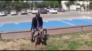 Мгновенная реакция собаки-телохранителя на атаку ножом(18 мая 2016, 15:17 Просто Хэнк YouTube-канал IDF Training опубликовал видео, демонстрирующее молниеносную реакцию бельгий..., 2016-05-18T15:34:34.000Z)