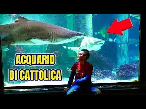 HO INCONTRATO UNO SQUALO! - ACQUARIO DI CATTOLICA - Leonardo D