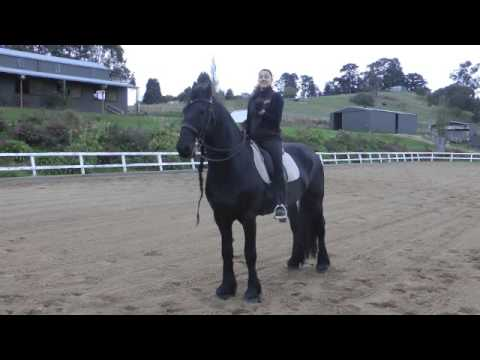 Trot to Halt Transitions Mad Easy Your Riding Success TV Episode 38