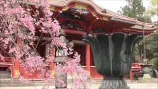 Cherry Blossom at Taiseki Temple, Fujinomiya, Japan 09/Apr/2016 #2 富士宮大石寺の桜 thumbnail