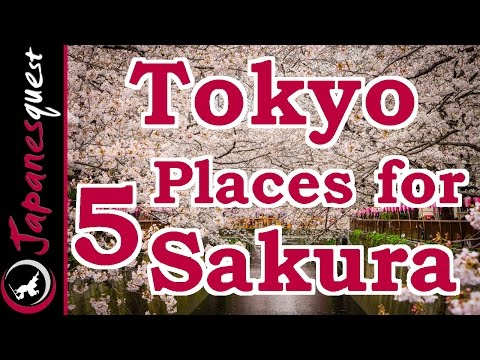 Top 5 Places to See Sakura (Cherry Blossoms) in Tokyo!
