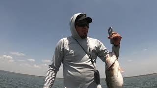 Late August white bass fishing Falcon Lake