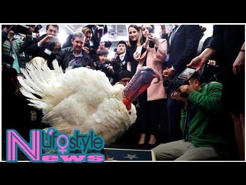 Trump pardons thanksgiving turkeys drumstick and wishbone