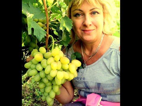 Лучшие сорта винограда!Путь к успеху! Фильм 1-й.