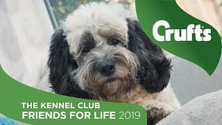 Ollie and Snoopy - The Kennel Club Friends for Life 2019