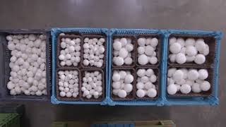 Champworld Laseta Mushrooms!