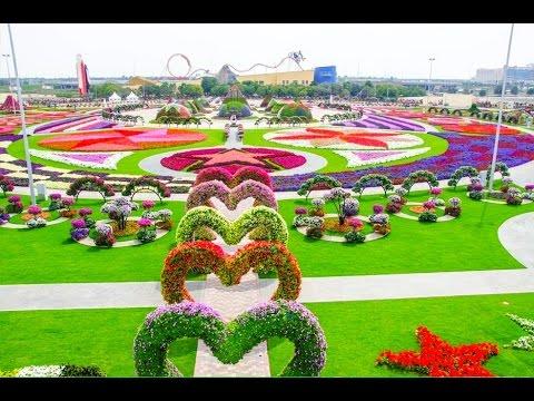 Dubai Miracle Garden 2016