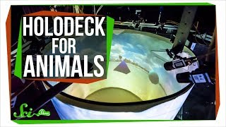 We Built a 'Holodeck' for Animals!