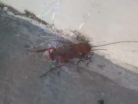 24 Hour Pest Control Phoenix AZ
