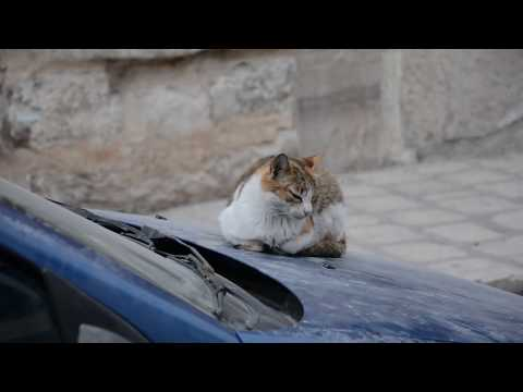Documentaire : Kairouan, une ville atemporelle.