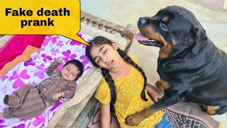 Fake death prank in front of my dog||cute dog videos.