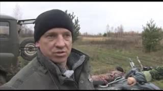 Натаска и притравка Западно-Сибирской Лайки на кабана