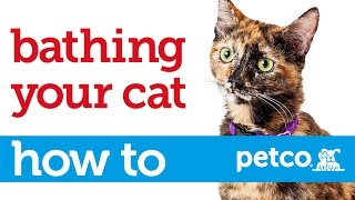 How Give Your Cat Bath Petco