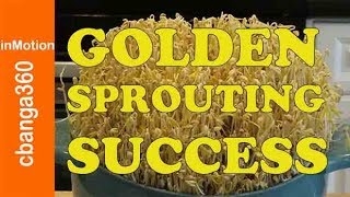 How To Grow Mung Beans Sprouts Quick Easy Cheap Effective Original Style